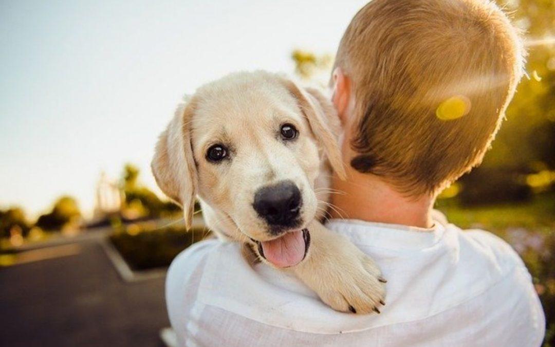 Celebra el día nacional del perro con Amazon Alexa
